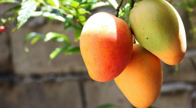 See Why You Should Eat Enough Mangoes in this Season.
